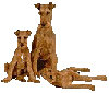 Click to join The Irish Terrier Ring